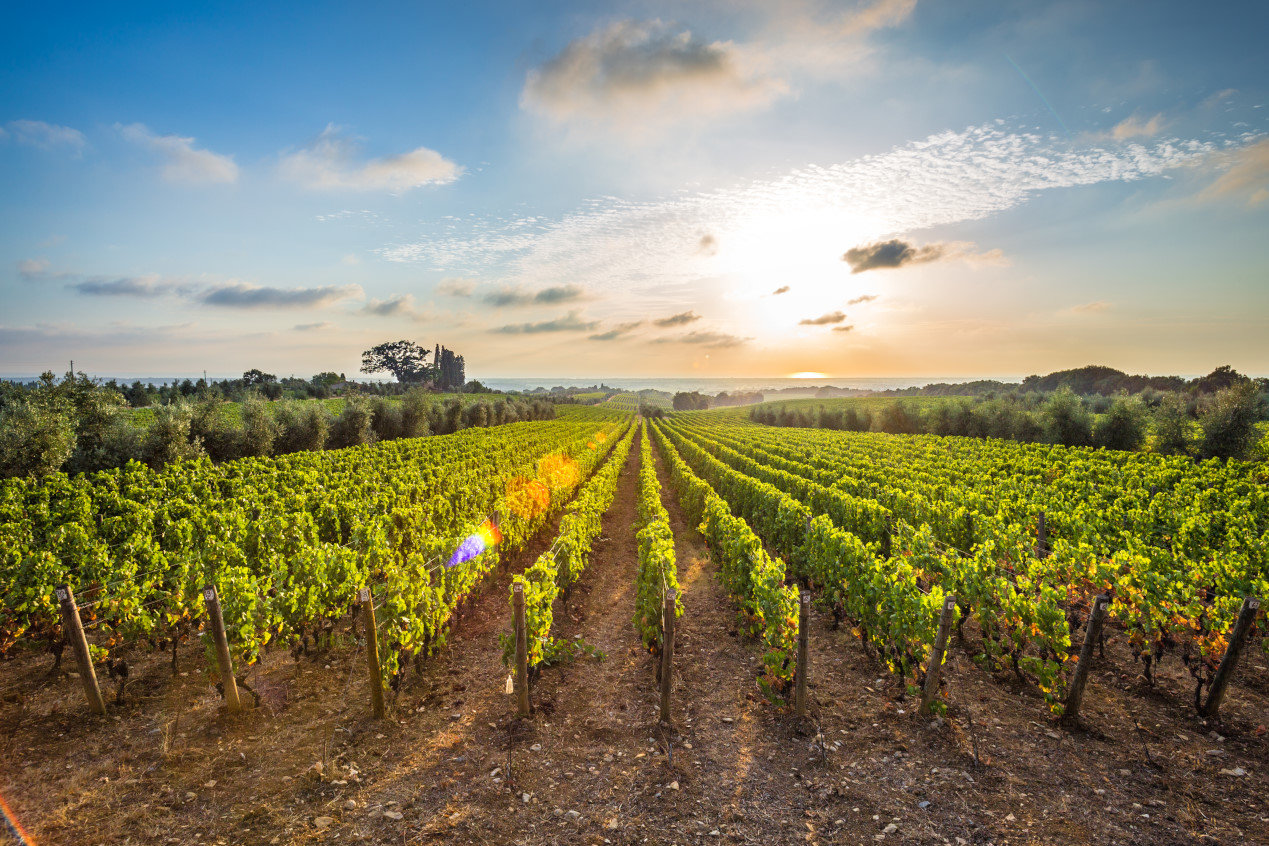 Things to do in Tuscany - Tuscan vineyards The sunset on the vineyards of the Bolgheri wine.
