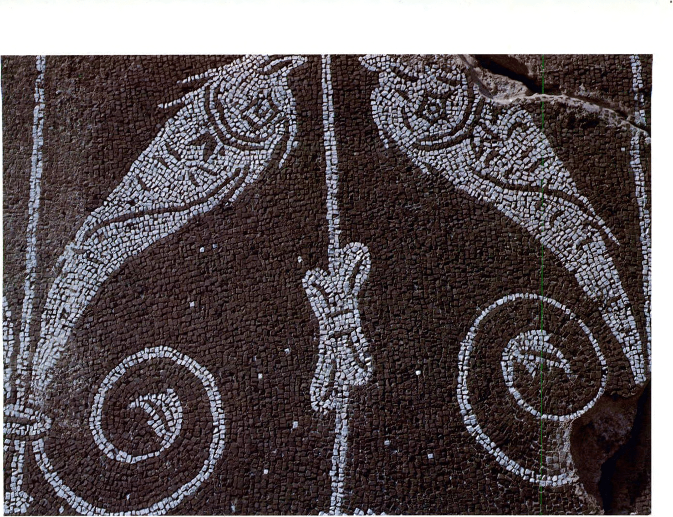 A two-colored mosaic pavement with dolphins inside the Baths of Caracalla