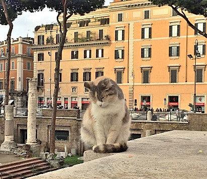 Cat Sanctuary of Rome (Photo Credit Gatti di Roma)