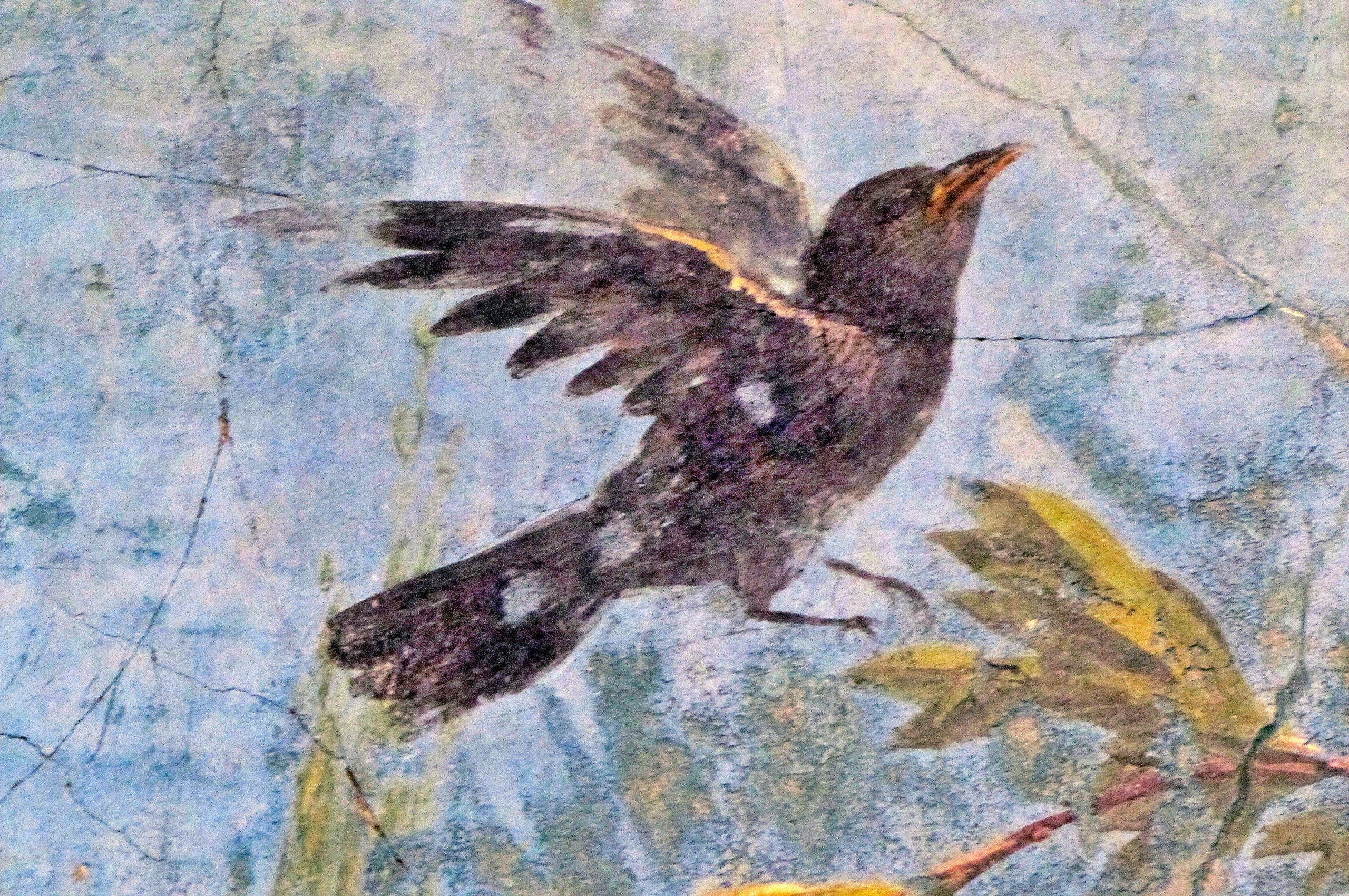 A bird, Roman Fresco-2, Rome, 5th c. A.D., National Roman Museum