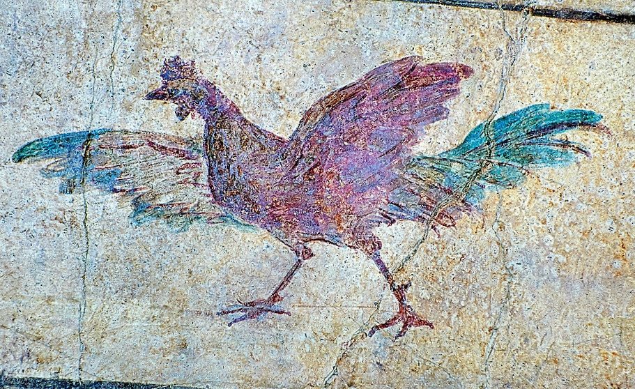 Fresco of a chicken 5th C. A.D,National Roman Museum Rome.