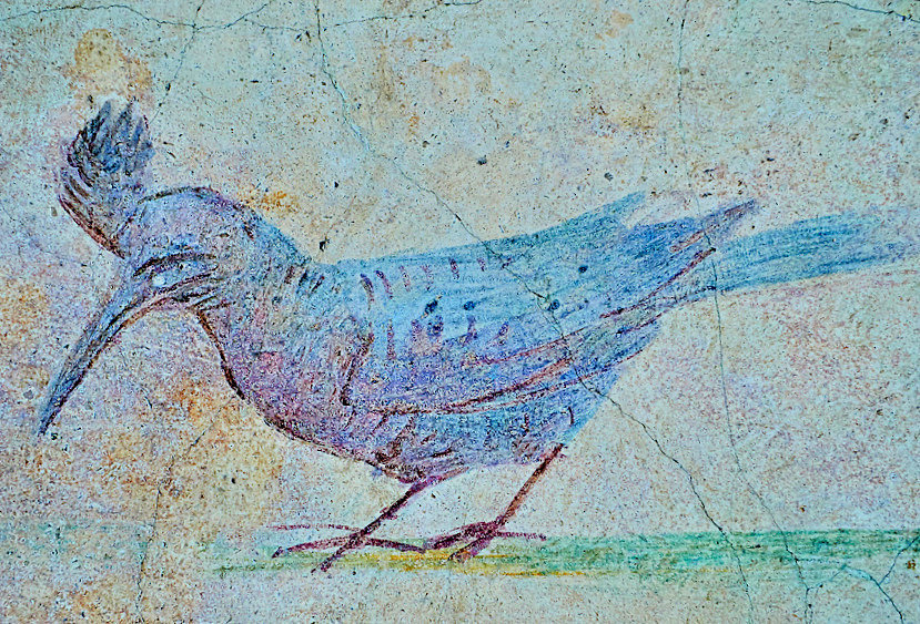 Roman Fresco of an exotic bird from The Large Columbarium in Villa Doria Panphilj, Rome. (second half of the first century AD). National Roman Museum-2