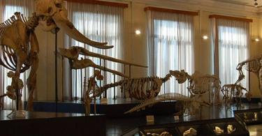 Civic Museum of Zoology Tickets